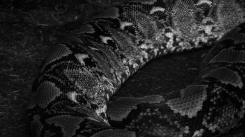 zoo_still_snake_widescreen